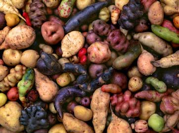 Some Tropical Root Crops.