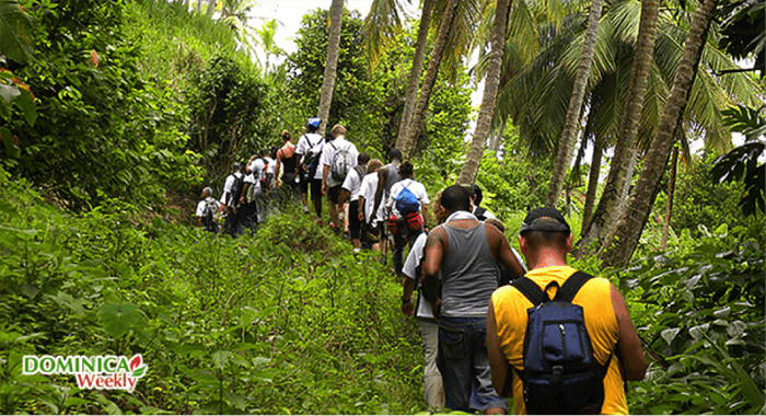 Group Hiking In Dominica.