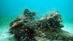 Indian Bay Reef