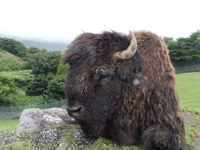 【九州自然動物公園アフリカンサファリ】予約・アクセス・営業時間情報 - じゃらんnet