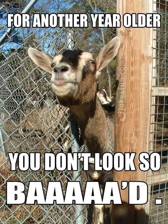 Joke4fun Memes Happy Birthday You Party Animal