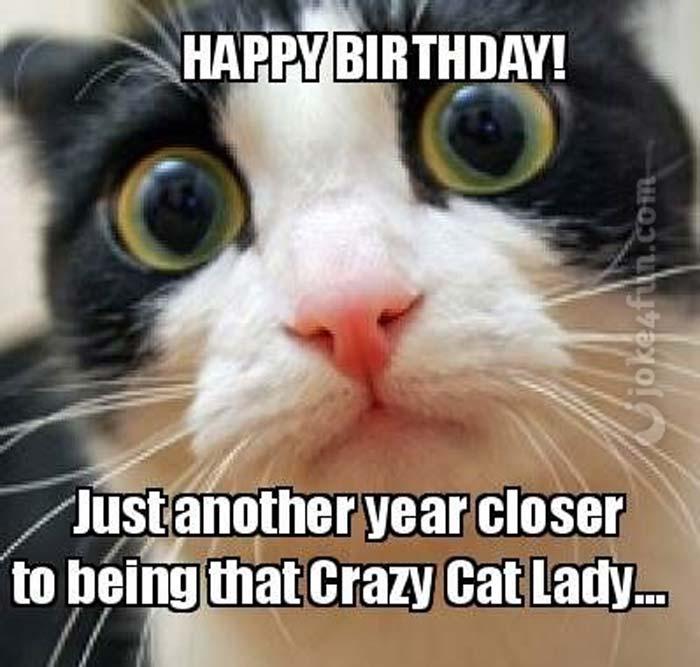 Joke4fun Memes Crazy Cat Lady