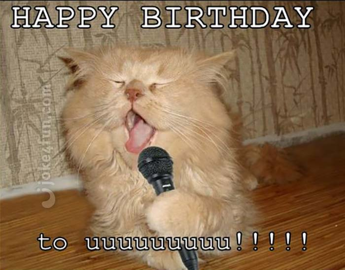 Joke4fun Memes Cat Will Perform A Birthday Song Just For You