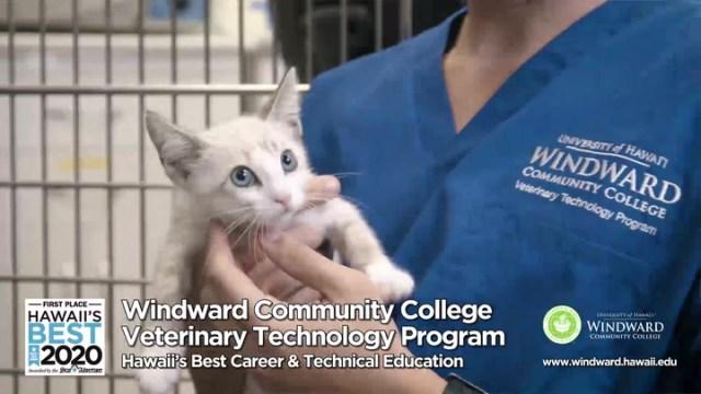 Windward Community College Veterinary Technology - Hawaii's Best 2020
