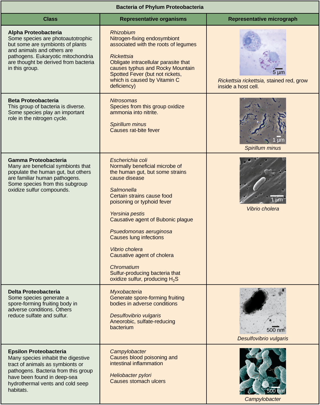 Characteristics Of Bacteria Worksheet Answer Key