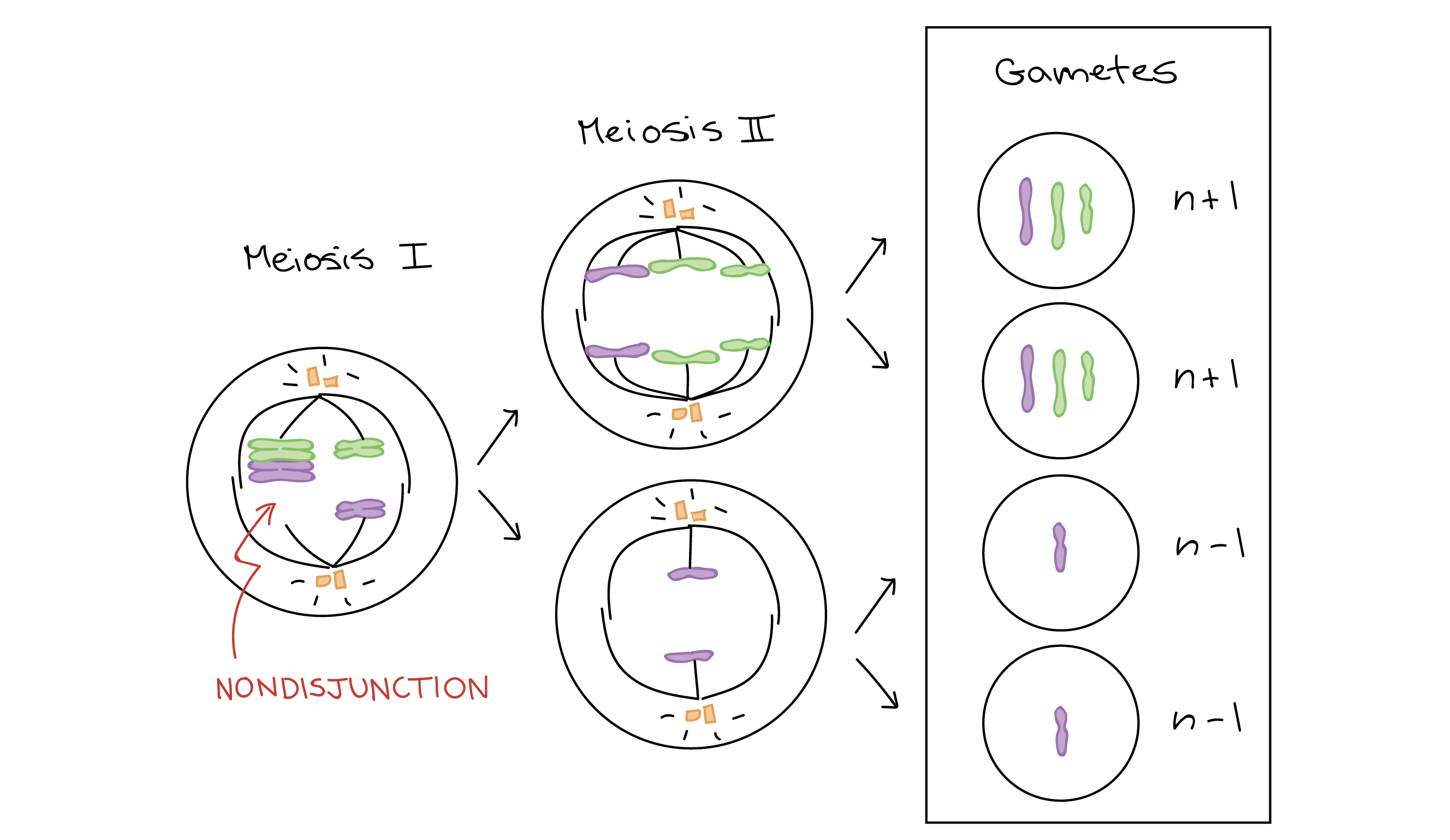 X And Y Chromosomes Diagram
