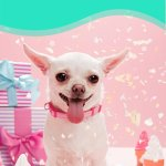 10 Totally Paw Some Dog Birthday Party Ideas Care Com