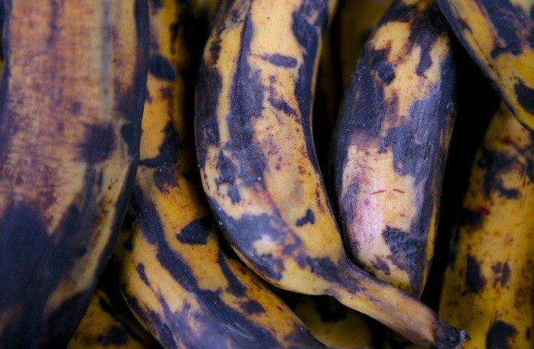 rotten-bananas