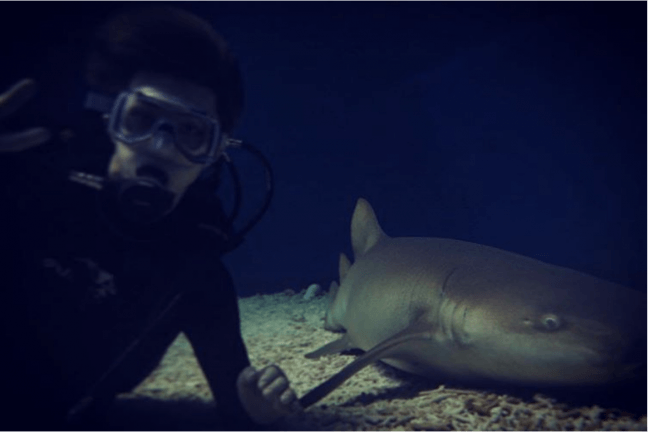Sehun's Underwater Adventure with a Shark / Sehun Instagram