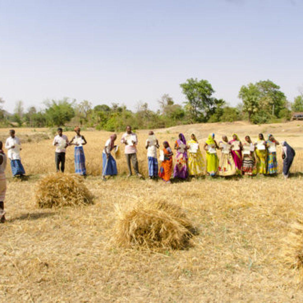 Landesa ayuda a familias de la casta Musahar a salir de la servidumbre