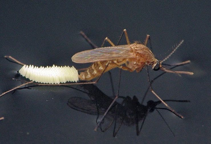 Prepare for West Nile Virus Story