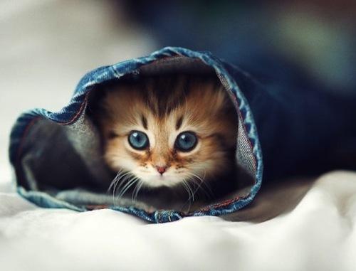 Rumah untuk anak kucing.