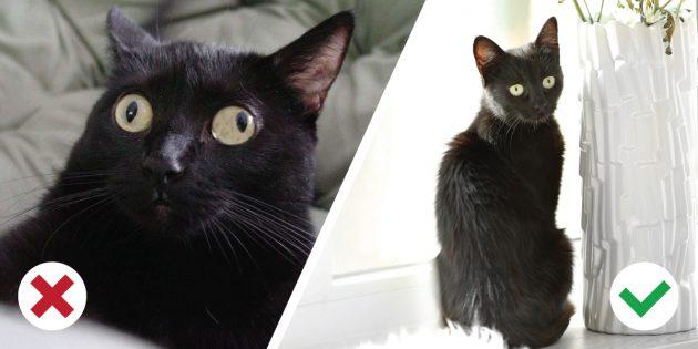 گربه از بین رفته است: چه باید کرد؟
