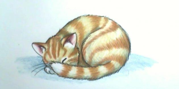 Sådan tegner du en sovende kat i realistisk stil