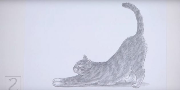 How to draw a standing cat in realistic style