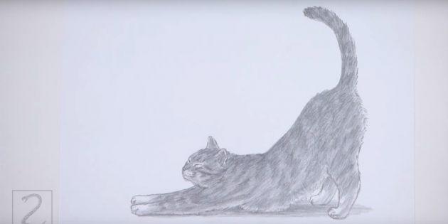 Hvordan man tegner en stående kat i realistisk stil
