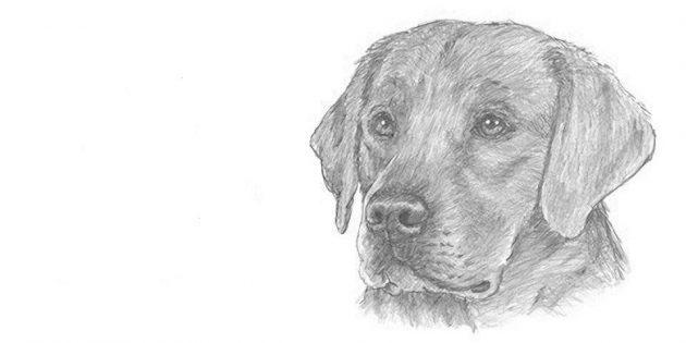 Como desenhar um cão de muffin realista
