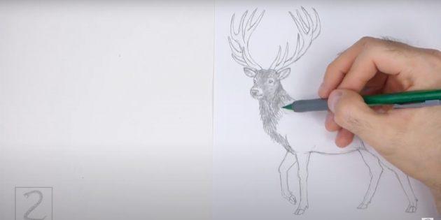 Miten tehdä hirvieläin: Aloita maalaus hirvi