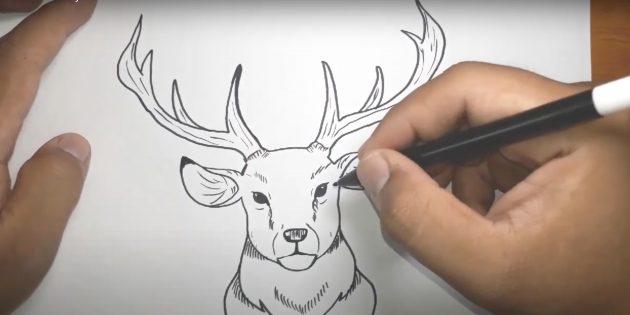 Kuinka piirtää hirvi: ympyrä korvat, tee koskettaa silmien alle