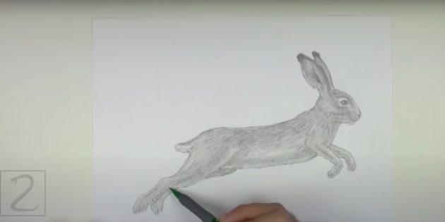 Làm thế nào để vẽ một con thỏ thực tế trong một bước nhảy