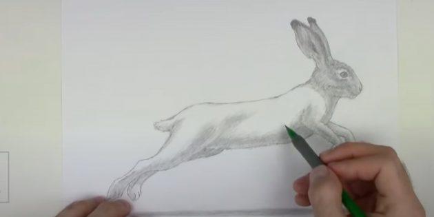Làm thế nào để vẽ một cái thỏ rừng: vừa với mõm