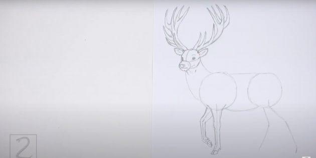 Kuinka piirtää hirvieläin: Piirrä toinen etuosa