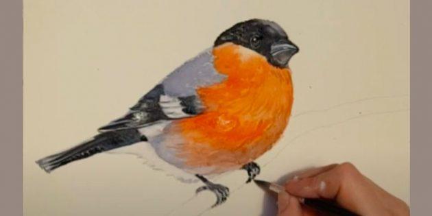 كيفية رسم Bullfinch: العين العين