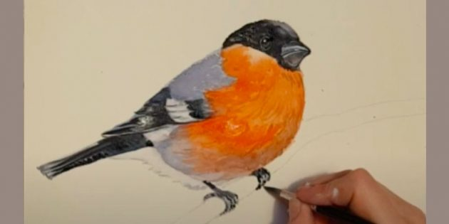 Hvordan tegne Bullfinch: Øyøyne og nebb
