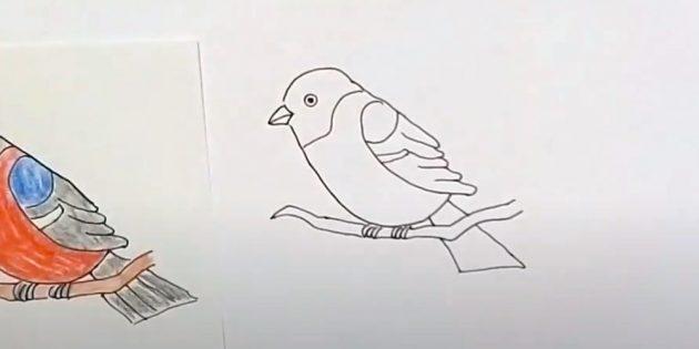 কিভাবে bullfinch আঁকা: একটি ফিরে ছবি