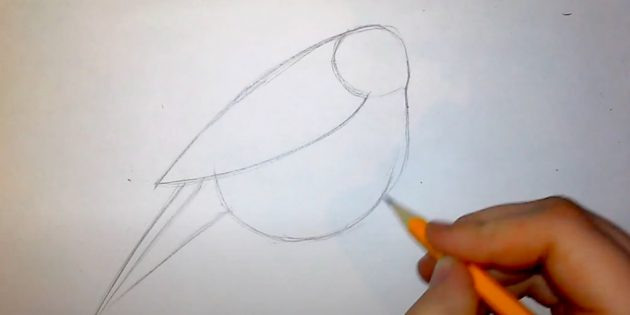 كيفية رسم Bullfinch: قضاء دائرة الجناح