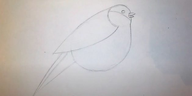 Comece a desenhar a cauda