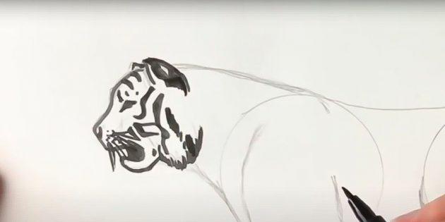 Табандар, құйрық және құлақ қайда болатынын ескеріңіз