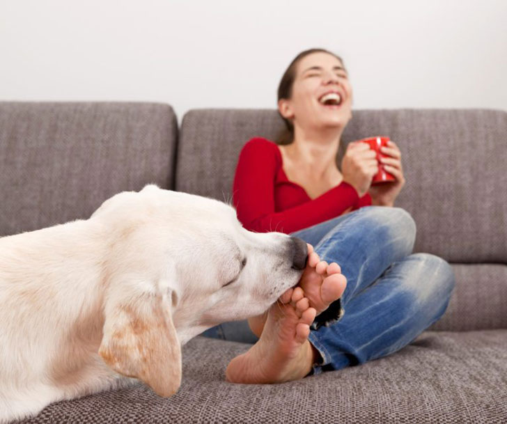 dog may like the taste of something you wear