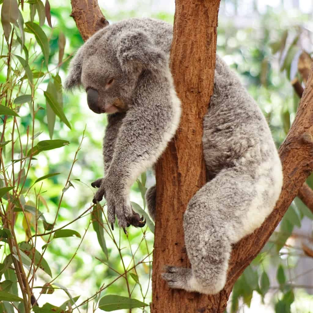 You Won T Believe How Long These 15 Animals Sleep