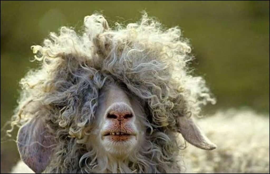 Imagini pentru bad hair