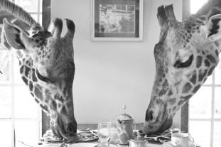 giraffe-manor-10