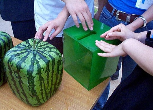 Squaremelon