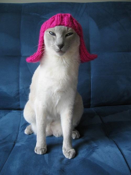 Kittywig