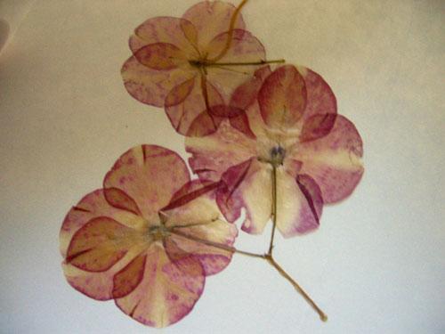 Pressedflowers