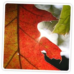 falltips-feature2.jpg