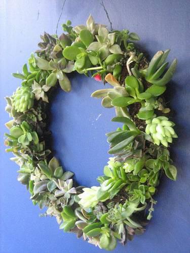 SucculentWreath.jpg