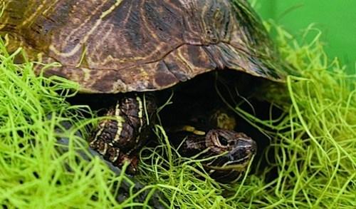 33_turtle11.jpg