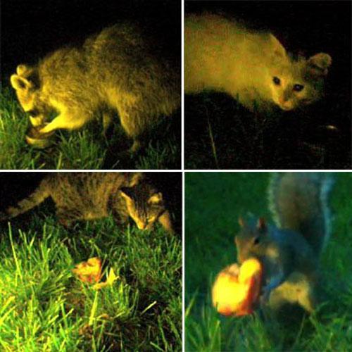 Animals At Night 4-Up