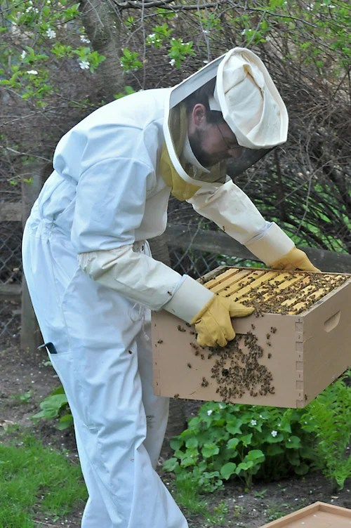 backyadbeekeeping_20080518.jpg