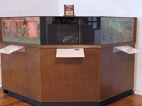 displaycase.jpg
