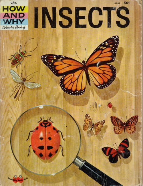 How And Why Insects