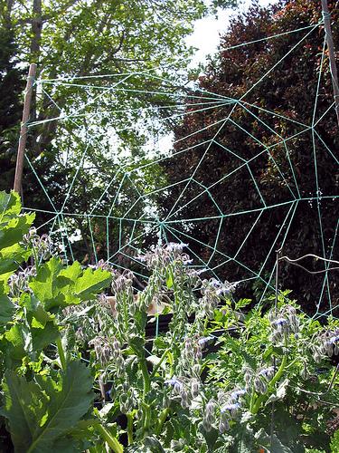SpiderwebBeans.jpg