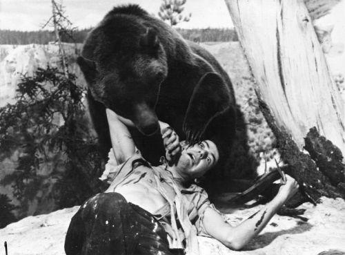 bear attack.jpg