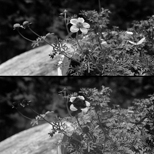 Uv Flowers
