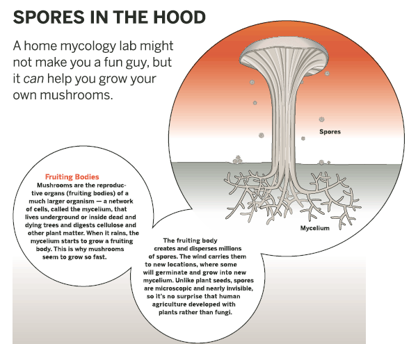 spores_in_the_hood.png